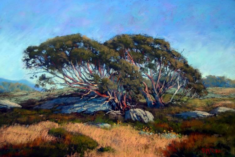 Stephen McCall - Alpine Artist